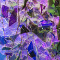 BlueGold on ClearGreenBluePurple Fracture & Streamers 2