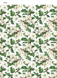 Apple Blossoms ~ 587268