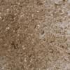 Bronze Transparent - System 96 Frit