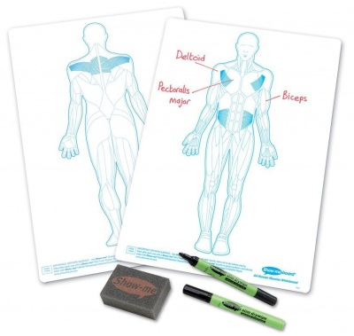 Show Me Human Muscles Drywipe Boards