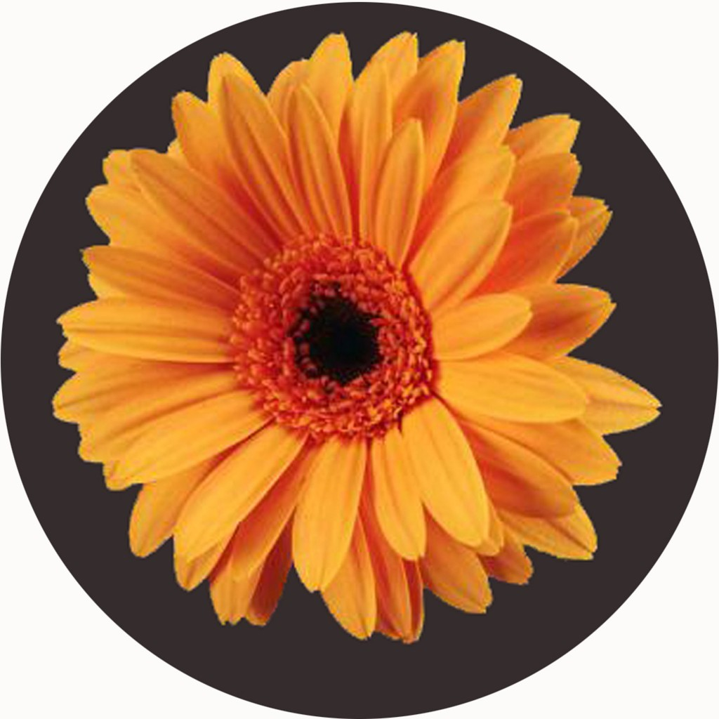 An image of Orange Flower Circular Mat