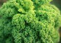 Celebrity greens were once foods of last resort