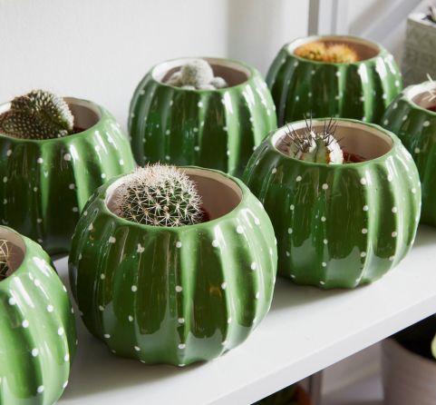 Cactus Plant And Planter