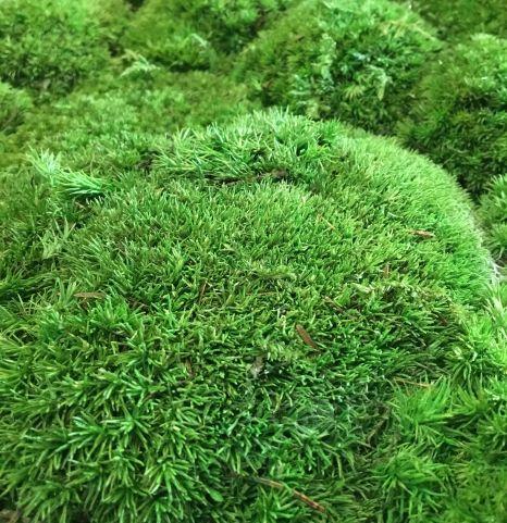 Innerspace Cheshire - Naturemoss - Bun - Mid Green - 2