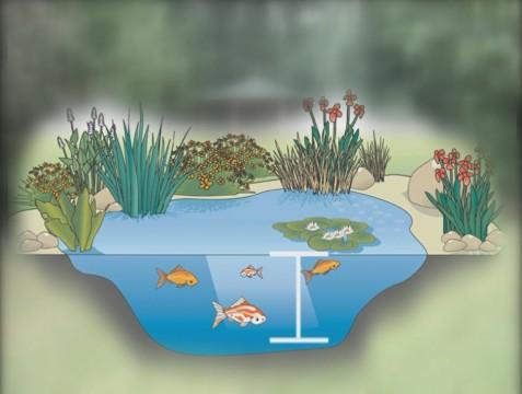 pond depth