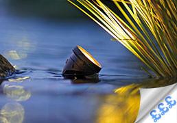 Special Offers - Pond & Garden Lights
