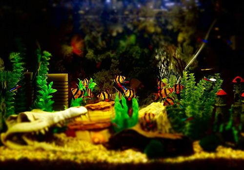 Aquarium Aerators