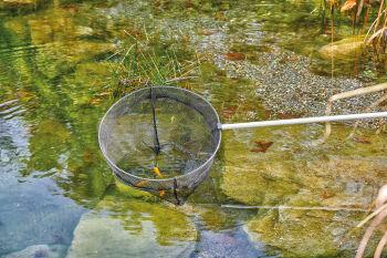 Oase Fish Net Large, telescopic