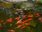 2m x 3m Goldfish Pond Kit