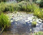 3m x 3m Wildlife Pond Kit