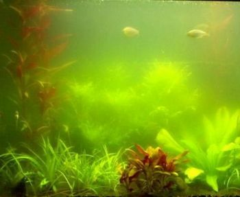 Algae Control Bulk: Treats 675,000 Litres
