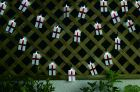 England Flag Solar String Lights