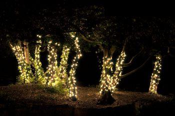Linea 100 LED String (Warm White) - 2w