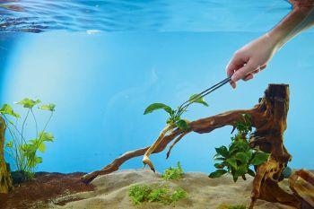 Aquarium Plant Tweezers