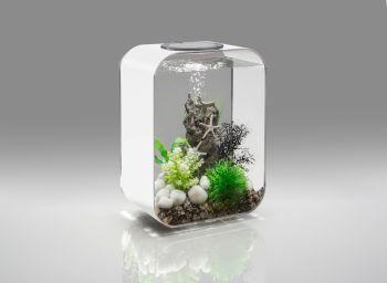 Starfish Mix - biOrb Decoration Pack