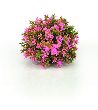 Pink Reef - biOrb Decoration Pack