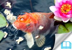 Spring Pond Care Tips